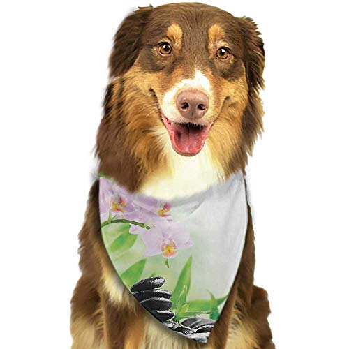 - Pet Dog Scarf Spa Zen Basalt Stones and Orchid with Dew Peaceful Nature Theraphy Massage Meditation W27.5 xL12 Scarf for Small and Medium Dogs and Cats