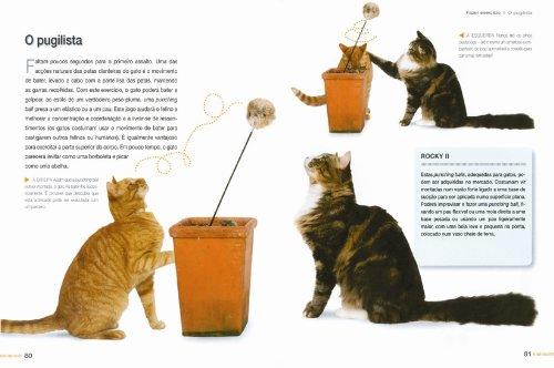 50 Jogos e Brincadeiras para o Seu Gato: Jackie Strachan, Booksmile: 9789898260383: Amazon.com: Books