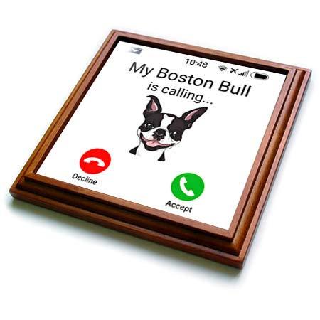 3dRose Carsten Reisinger - Illustrations - My Boston Bull is calling Funny Incoming Phone Call Holiday Terrier - 8x8 Trivet with 6x6 ceramic tile (trv_319391_1)