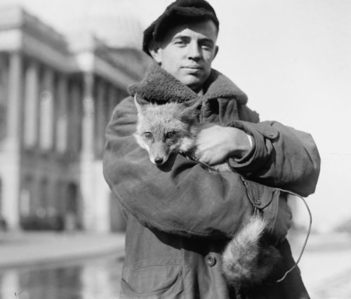 1920 Photo Geo  M  Green Holding Fox Vintage Black   White Photograph C3