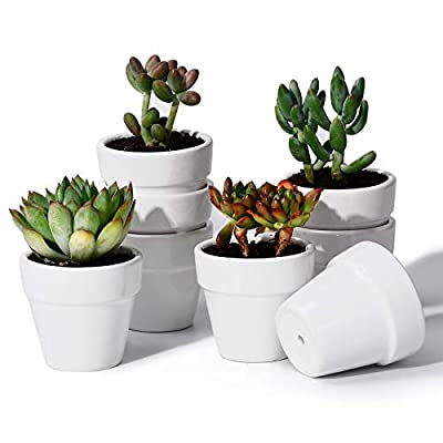 POTEY Mini Ceramic Plant Pots - 2.2 Inch Tiny Planters for Succulents Cactus Glazed Indoor Container with Drain Hole - Set of 8, White: Garden & Outdoor