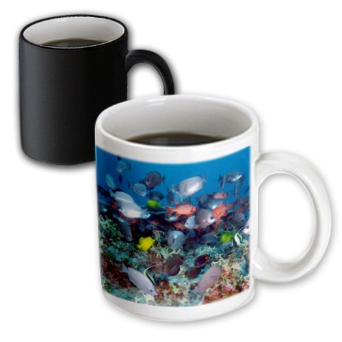 3dRose mug_44933_3 Tropical Coral Reef Fish, Magic Transforming Mug, 11-Ounce (Coral Reef Table Coffee)