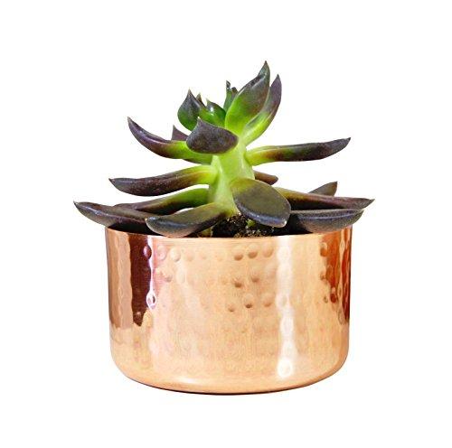 Alchemade 3 Hammered Copper Succulent Planter Plants