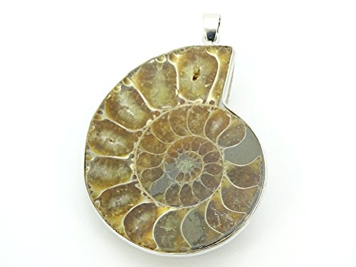 jennysun2010 40x53mm Natural Ammonite Fossil Snail Gemstone Silver Plated Pendant Charm Beads 1 Piece per Bag for Necklace Earrings Jewelry Making Crafts - Fossil Pendant Ammonite Bead