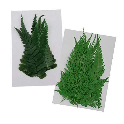Fityle 22 Pack Real Pressed Dried Flowers Black Ferns Plants Leaves Embellishments DIY Materials Card Making Jewelry Resin Crafts Scrapbooking Arts ()