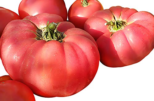 50+ ORGANICALLY Grown Giant 1-2 LB German Johnson Tomato Seeds, Heirloom Non-GMO, Low Acid, Indeterminate, Open-Pollinated, Productive, Delicious, from USA