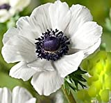 Marianne White Anemone Seeds - 50+ Count Saavyseeds