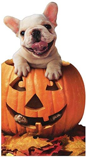 Dog In Jack O Lantern - Avanti Halloween Card