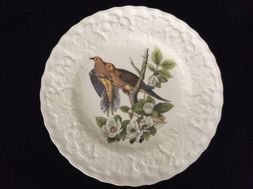 Alfred Meakin England Birds of America Carolina Turtle Dove 11