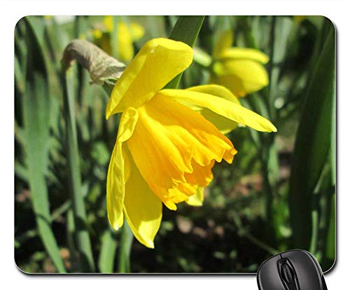 Mouse Pad - Daffodil Yellow Daffodil Easter Lilies Garden