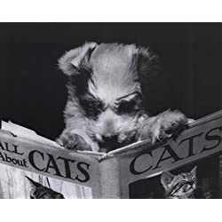 All About Cats Dog Reading Book Art Print Poster - 16x20 Photography Mini Poster Print, 20x16