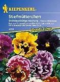Stiefmütterchen, 'Orchideenblütige Misch.'