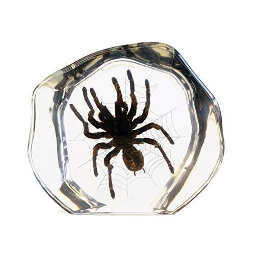 (REALBUG Desk Decoration Tarantula)