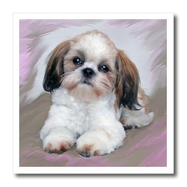 Shih T-shirt Sweatshirt - 3dRose ht_4807_2 Shih Tzu Puppy-Iron on Heat Transfer for White Material, 6 by 6-Inch