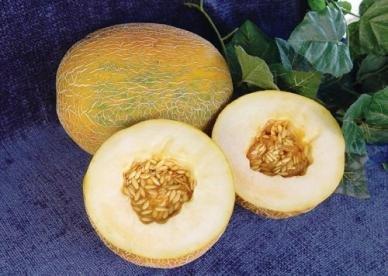 David's Garden Seeds Fruit Cantaloupe Ananas DGS146BG (White) 100 Heirloom Seeds
