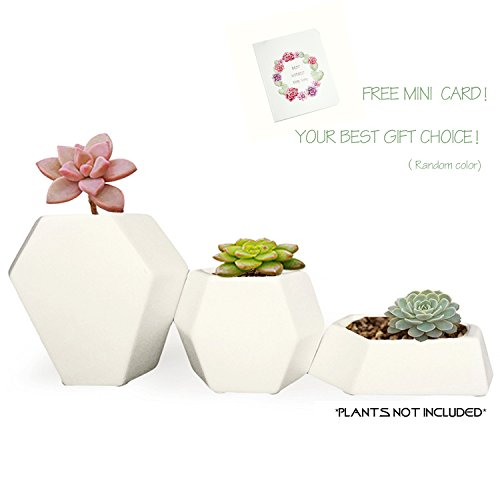 Ceramic Small Collection Geometric Planter ( 3 Pack-White) Hexagon Succulent Plant Pot/Planter/Container