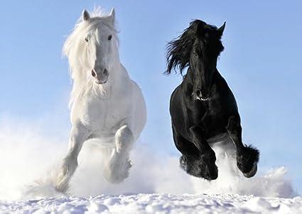 3 White Stallions Bob Langrish Maxi Poster 61cm x 91.5cm new and sealed