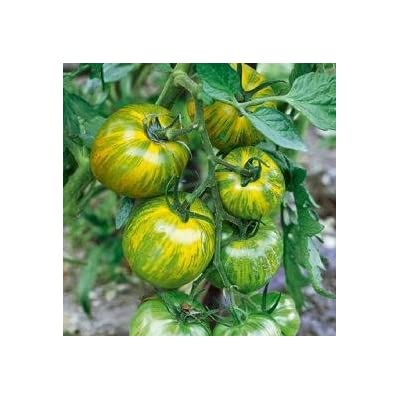 David's Garden Seeds Tomato Slicing Green Zebra SL2276 (Green) 50 Non-GMO, Organic, Heirloom Seeds : Tomato Plants : Garden & Outdoor