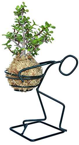 - Kokedama Elephant Bush - Portulacaria Afra and Holder Set