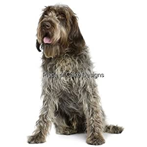 "8"" Round ~ Wirehaired Pointing Griffon ~ Dog Breed ~ Edible Cake/Cupcake Topper!!! 5"