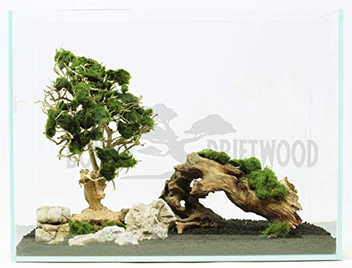 Bonsai Driftwood Aquarium Tree (5 Inch Height) Natural, Handcrafted Fish Tank Decoration | Helps Balance Water pH Levels, Stabilizes Environments | Easy to Install by Bonsai Driftwood (Image #8)