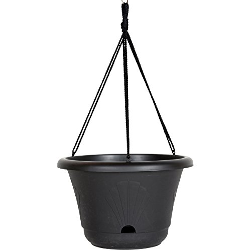 - Bloem 010237 Lucca Self Watering Hanging Basket, 13