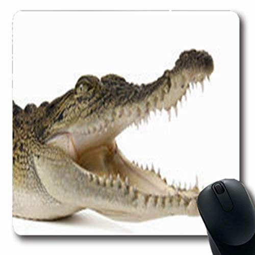(Pandarllin Mousepads Bight Australian Saltwater Crocodile Smile Crocodylus Porosus Wildlife Nature White Oblong Shape 7.9 x 9.5 Inches Oblong Gaming Mouse Pad Non-Slip Rubber Mat)