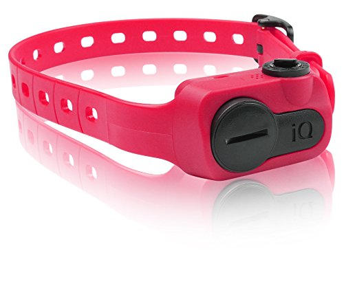 Dogtra iQ No Bark Collar, Pink by Dogtra