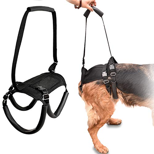 Support Harness - LOOBANI Dog Support Harness for Back Legs, Lift Rear Mobility Aids for Aging, Injuries and Rehabilitation After Surgery (XL)