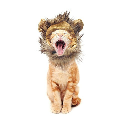 Pets Can Play King Lion Mane Wig for Cats, Small Dogs (Cat Mane Costume Amazon)