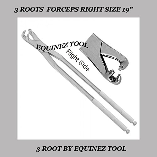 19  3 Root Right Hand Extraction Forcep, Hand Crafted,S,steel, Equine with pouch