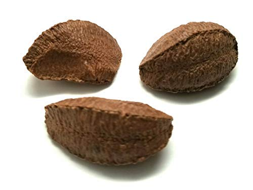 Brazil Nuts, ''Top Quality'' In shell Polished Large (10 lbs.) by Presto Sales by Presto Sales