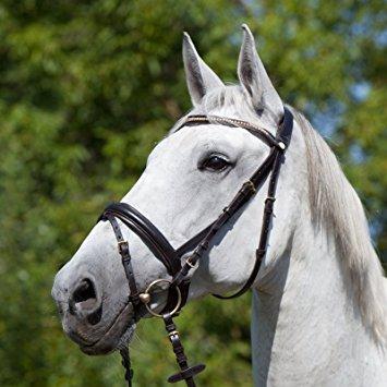 VB   Vollbluet   COB Horse & Passion Bit Persei