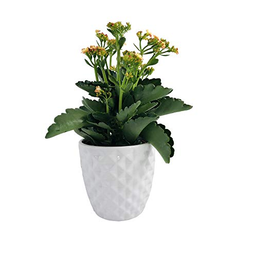 Better-way 5.5 Inch White Ceramic Flower Pot Orchid Container Succulent Planter Round Bowl Decorative Ceramic Pots for -