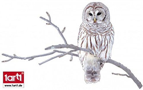 Owls Poster-Sticker Wall-Tattoo - Barred Owl Sitting On A Branch (26 x 18 inches)