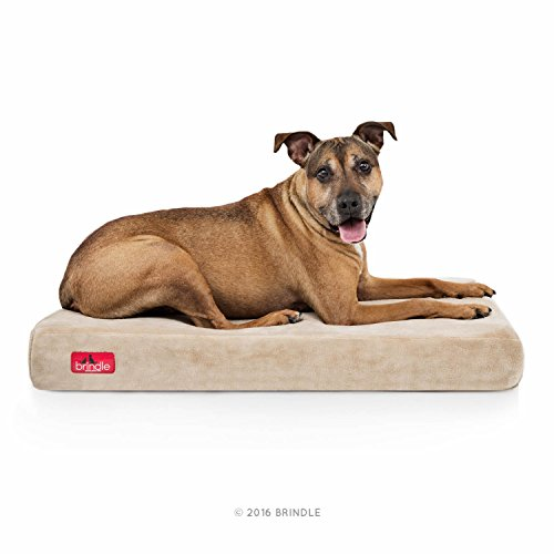 Brindle 4 Solid Memory Foam Orthopedic Dog Bed with Removable Waterproof Velour Cover