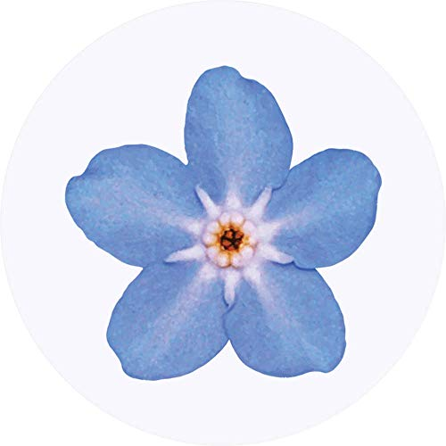 Azeeda 24 x 40mm Round 'Forget-Me-Not Flower' Stickers (SK00015693)