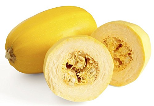 0.25 Ounce(40Seeds) Spaghetti Winter Squash Garden Vegetable Treated Seeds