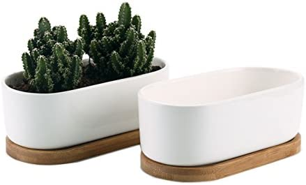 T4U 6.5 Inch Ceramic White Modern Oval Design Succulent Plant Pot Cactus Plant Pot with Free Bamboo Tray Package 1 Pack of 2