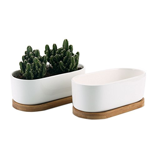 T4U 6.5 Inch Ceramic White Modern Oval Design Succulent Plant Pot/Cactus Plant Pot with Free Bamboo Tray Package 1 Pack of 2 (Pot Oval Plant)