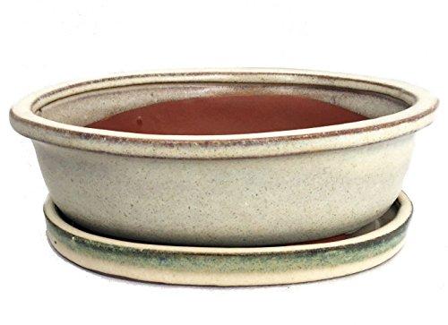 Ceramic Bonsai Planter with Saucer - Cream Oval - 8
