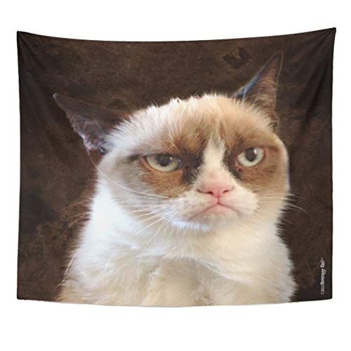 Semtomn Tapestry Artwork Wall Hanging Internet Grumpy Cat Brown Meme Memes Funny 50x60 Inches Tapestries Mattress Tablecloth Curtain Home Decor Print]()