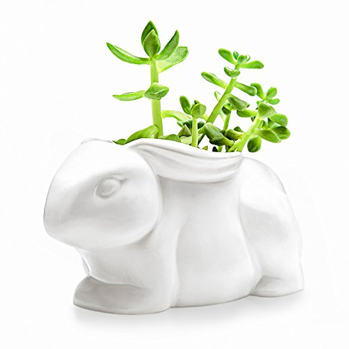 Mkono Small Succulent Planter White Ceramic Cactus Plant Pot Vivid Rabbit Shape by Mkono