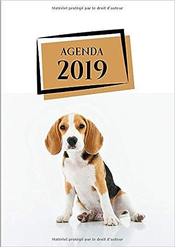 Agenda: Semainier - Grand Format A4 - Animaux Chien Beagle ...