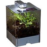 Sumpfpflanzen - Terrarium, groß, Mix fleischfressender Pflanzen - Sarracenia-Hybride, Sarracenia psittacina, Dionaea muscipula
