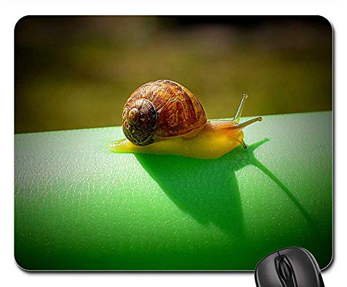 Mouse Pad - Snail Slow Nature Invertebrate Gastropod Insect