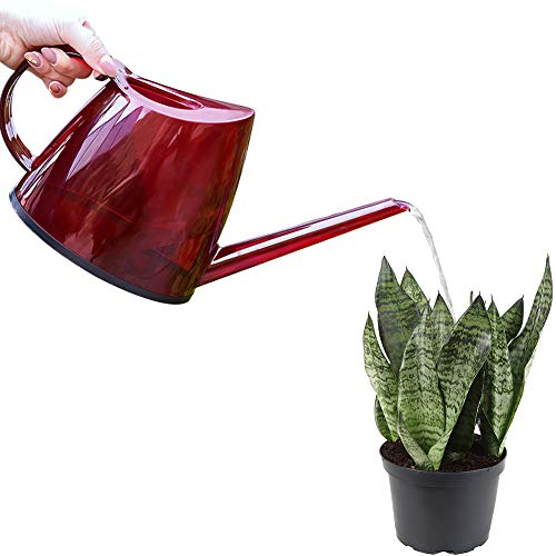 Buyoung Watering Can for Plants, Gardening, Home Decor, 47oz by Buyoung