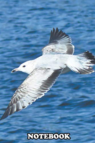Notebook: Seagull On The Wind , Journal for Writing, College Ruled Size 6