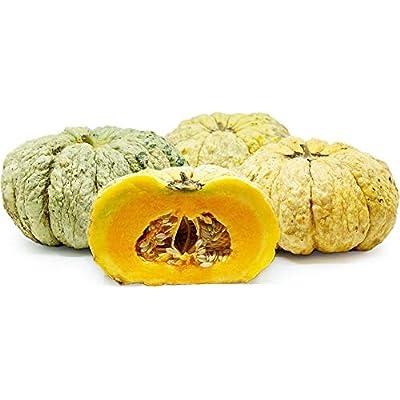 30+ Prescott Fond Blanc Melon (VRZ) Seeds; French Cantaloupe; Drought-Tolerant : Garden & Outdoor
