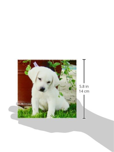 Set of 4 3dRose cst/_127686/_3 Sad Eyes Puppy Labrador Ceramic Tile Coasters